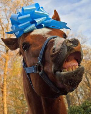 Häst present